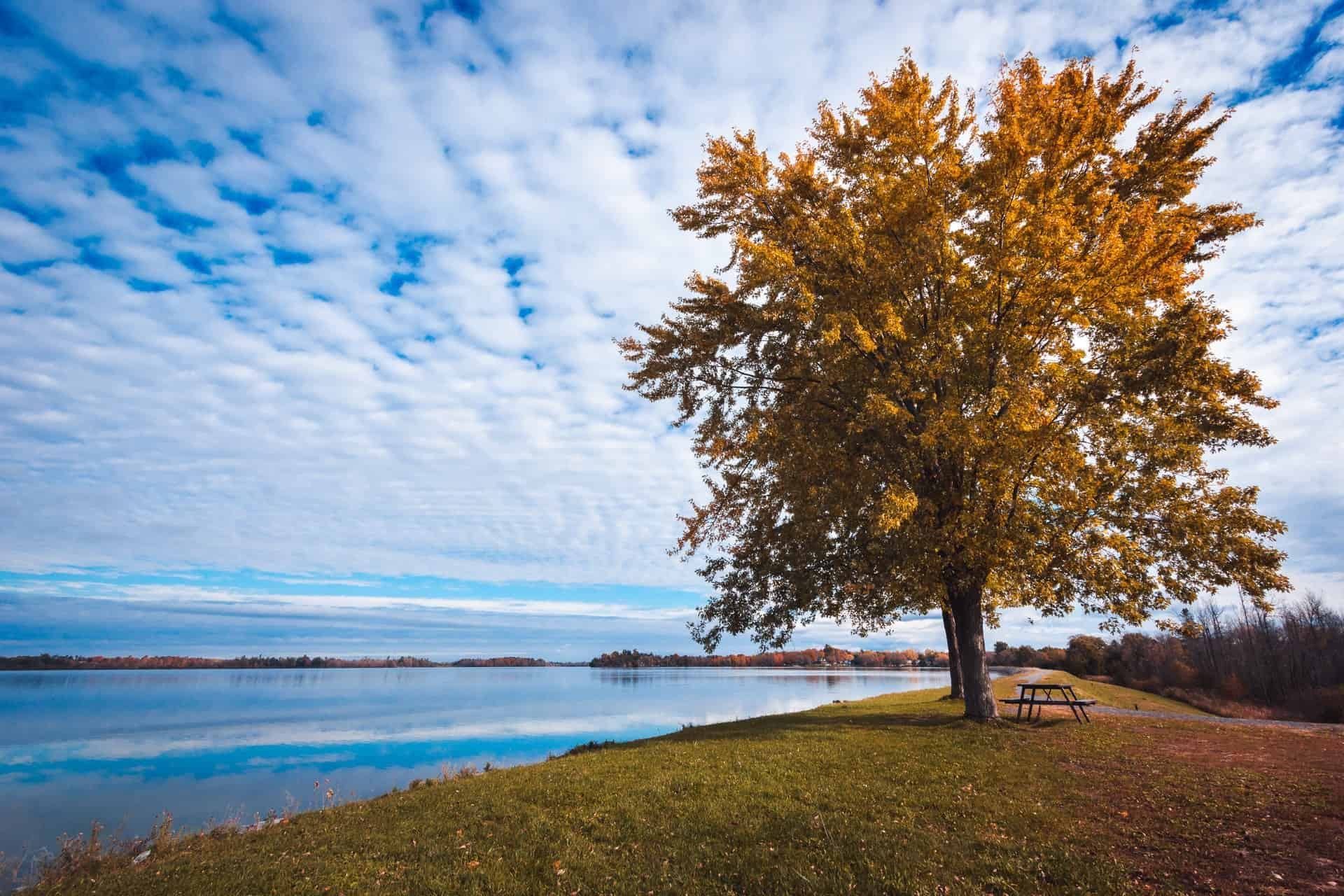 things to do in kingston