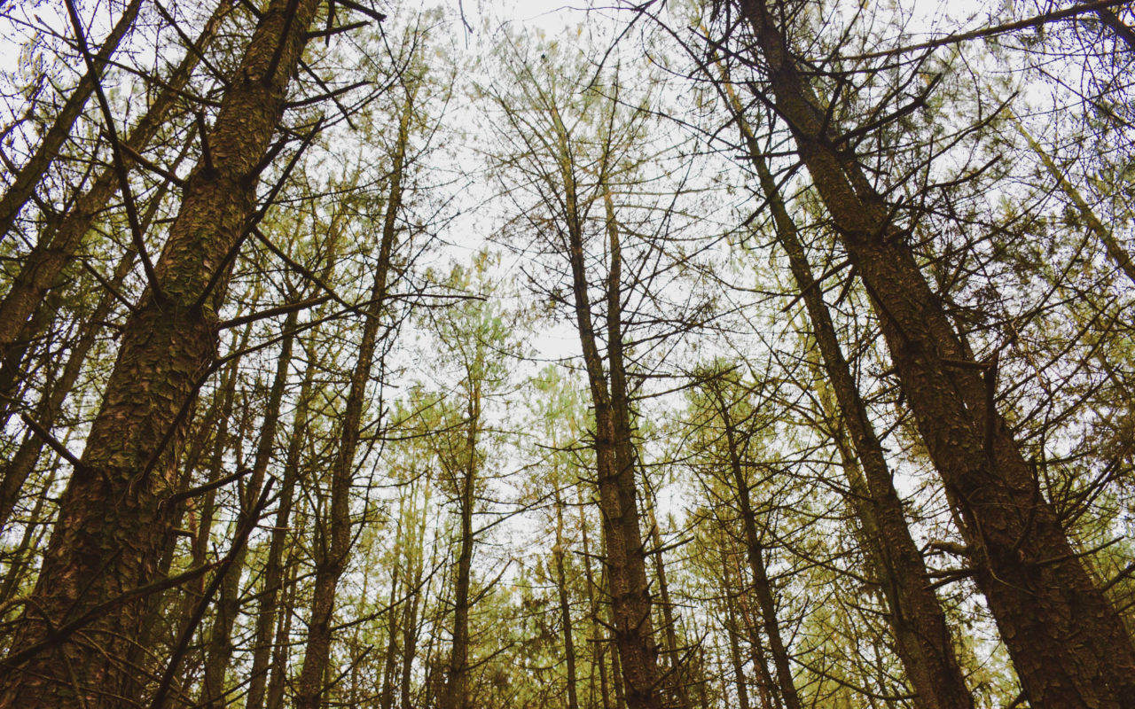 things to do in durham ontario - durham regional forets